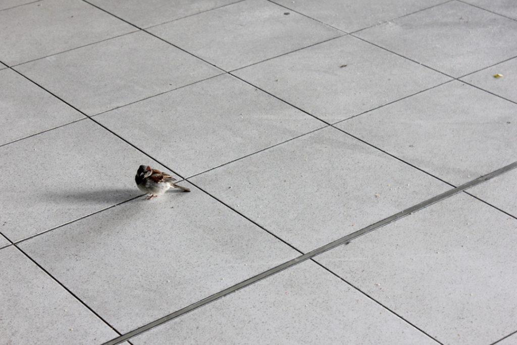 2small-sparrow1